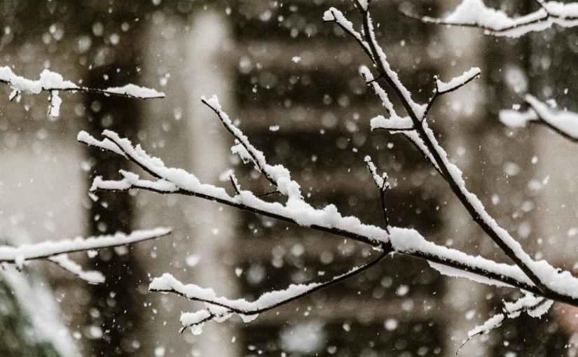 Una nevicata coifiocchi